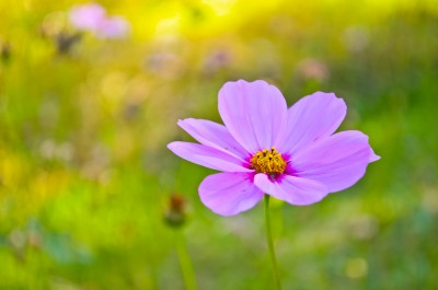 This is all for you. A beautiful lone flower sits in a garden.