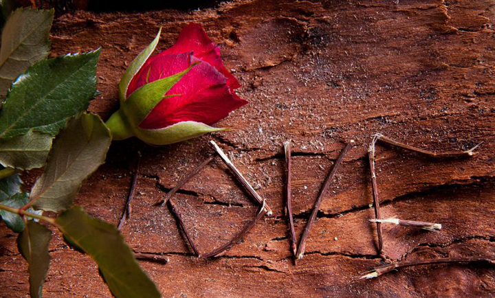 What love really is - symbolized by the word love written with twigs on bark with a red rose.