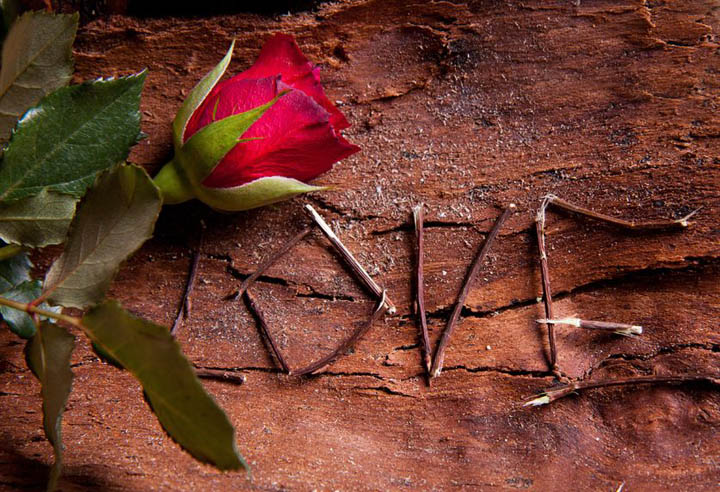 The word love written in twigs against bark with a red rose on top.