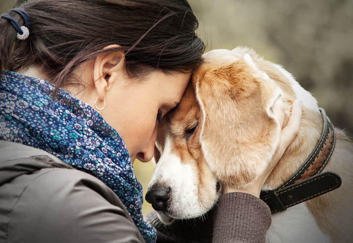 A beautiful woman is consoled by her dog after a breakup.