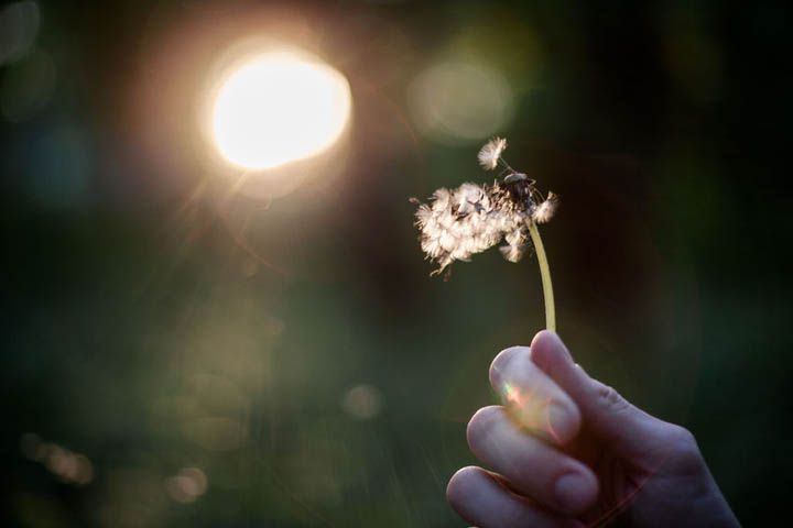 A woman holding a dandelion in her hand blowing it away making a wish, signifying letting go.